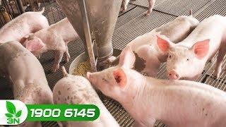 Giá thức ăn chăn nuôi tăng hơn 10%