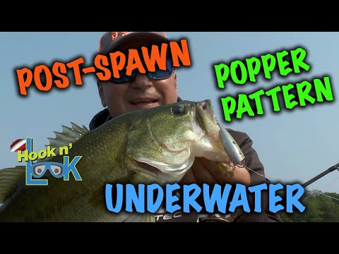 An Underwater Endorsement to Why Post-Spawn Largemouth Bass Prefer Topwater Baits.An Underwater Endorsement to Why Post-Spawn Largemouth Bass Prefer Topwater Baits.<media:title />