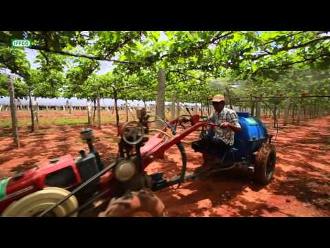 ) Improving Grape crop quality and yield through spray irrigation of water soluble fertilizers