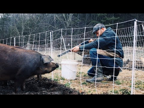 How I'm Gonna Shoot my PIGS Safely + Humanely