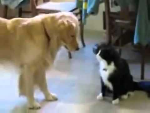 Cachorro E Gato Brincando
