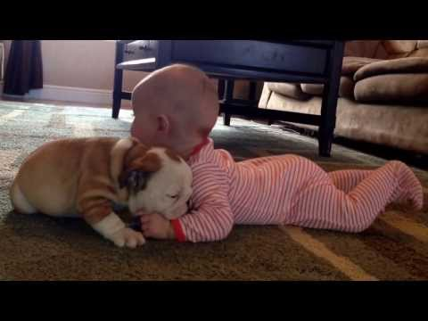 Adorable puppy and baby video of the day