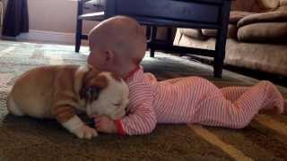 Nothing Is Cuter Than This Video Of A Bulldog Puppy Kissing A Baby