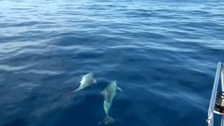 Dolphins Mallorca 2016