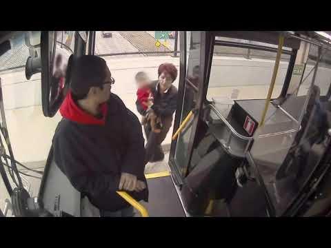 Bussikuski pelastaa lapsen kadulta