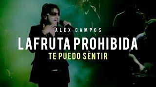 La fruta prohibida (Te puedo sentir) - Alex Campos | Audio Oficial