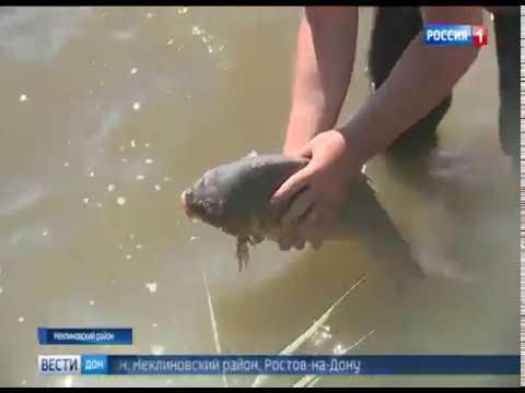 Управлением Россельхознадзора осуществлен контроль рыбы в одном из рыбоводческих хозяйств Ростовской области