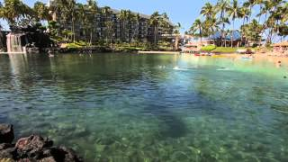 The Lagoon at Hilton Waikoloa Village