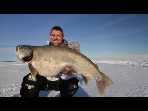 giant 30lb lake trout through the ice of lake superior