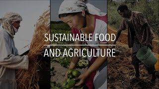 Sustainable Food?