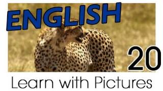 English Safari Animals Vocabulary, Learn English Vocabulary With Pictures