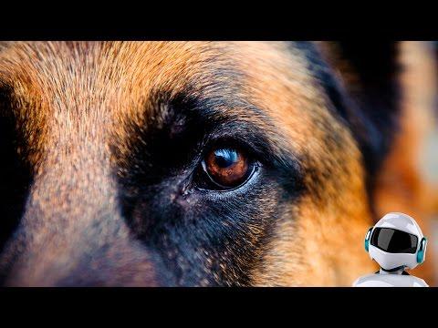 10 самых умных собак в мире