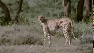 Video Cheetahs: Against All Odds MP3, 3GP, MP4, WEBM, AVI, FLV Desember 2018