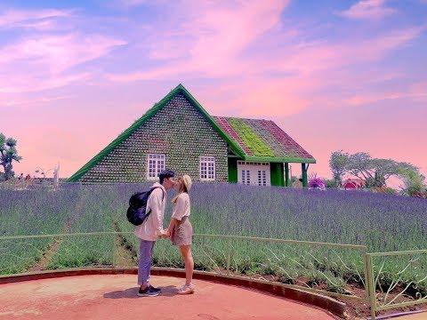 Cánh đồng Lavender Đà Lạt đẹp ngất ngây tại Fresh Garden