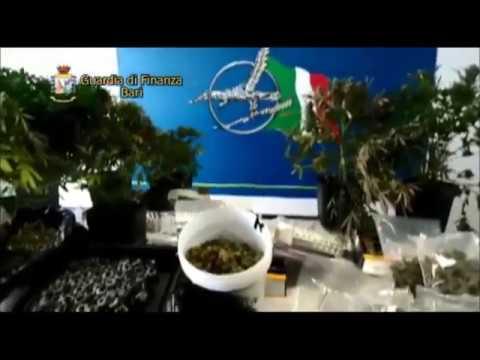 BITONTO - Sequestrato a Mariotto un laboratorio di sostanze stupefacenti