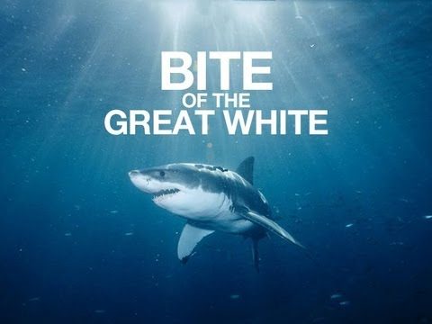 Bite of the Great White  Shark Week remix