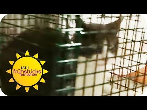 Verheerende Tierliebe: Katzenplage auf Ibiza | SAT.1 Fr ...