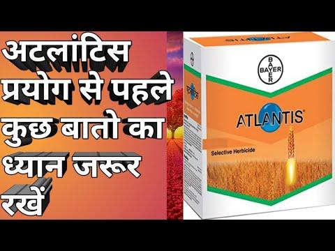 Bayer atlantis herbicide full details। अटलांटिस से गेहूं को कैसे बचाएं।