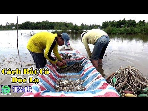 Không ngờ Cách Bắt Cá Kỳ Lạ này lại Dính Quá Nhiều Cá | Fishing | NGÃ NĂM TV T246 - Thời lượng: 24:03.