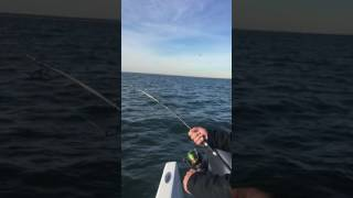 Pre Turkey Day Stripers on Video