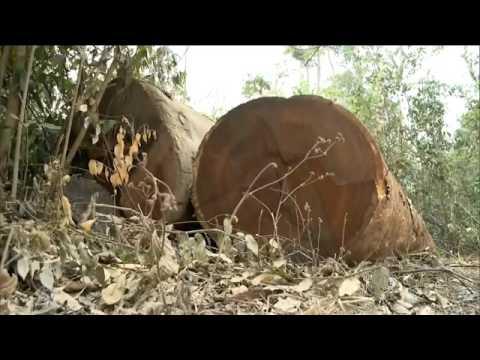 Chefe do Ibama é Baleado dentro da Reserva Araribóia em Arame-Ma