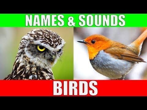 Sana Tänään: Lintu