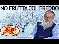 Dott. Mozzi: Niente frutta col freddo
