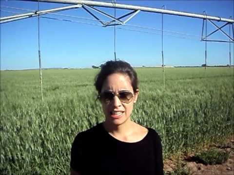Agrodistribuidor na Estrada - Sonora - México