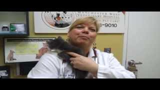 Pet Tips - Medical Care For Kittens