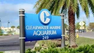 Clearwater Aquarium in 60 sec with an iphone6plus via Cleargram and VSPC