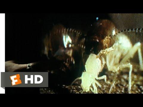 Mimic (1/9) Movie CLIP - Entomology 101 (1997) HD