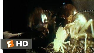 Nonton Mimic  1 9  Movie Clip   Entomology 101  1997  Hd Film Subtitle Indonesia Streaming Movie Download