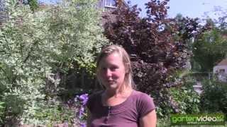 #1248 Blaue Farben im Garten - Rittersporn und Glockenblume (Delphinium, Campanula)