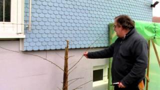 #323 Schneiden im Garten 2011 Herr Inderkum 3v10 - Schnitt eines Pfirsichspaliers
