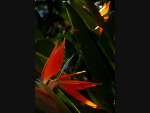 Art of  Bird of Paradise Blossom