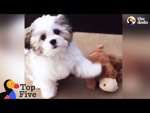 il-cagnolino-e-il-suo-migliore-amico