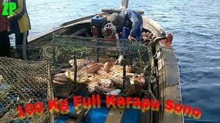 Video 100 kg full Kerapu Sono masuk bubu perangkap ikan MP3, 3GP, MP4, WEBM, AVI, FLV September 2019
