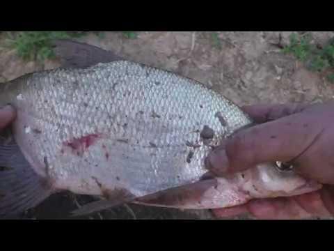 рыбалка на кормушки какие и на кого прикормки