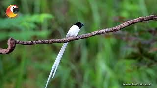 Download Video TAUKAH KALIAN?!? Tentang Burung Tali Pocong MP3 3GP MP4