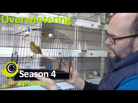 The Canary Room Season 4 Episode 1 - Overwintering Birds Part 1