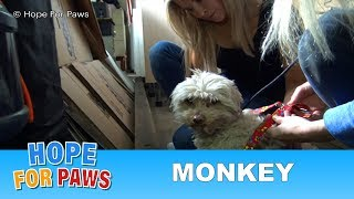 Hope For Paws' first Monkey rescue with a special guest star. by Hope For Paws