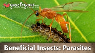 Beneficial Insects - Parasitic Organisms
