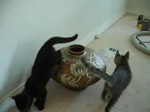 Speel Kittens spelen met vaas af