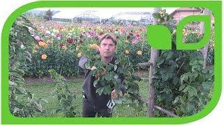 Eine Rabatte aus Lubera-Apfelbäumen, Beerensträucher und Stauden