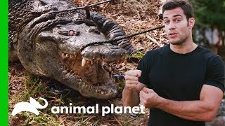 Evan Gets Up Close With A 300lb Crocodile For A Medical Check-Up | Evan Goes Wild by Animal Planet