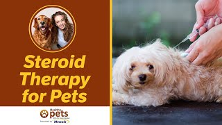 Steroid Theraphy for Pets