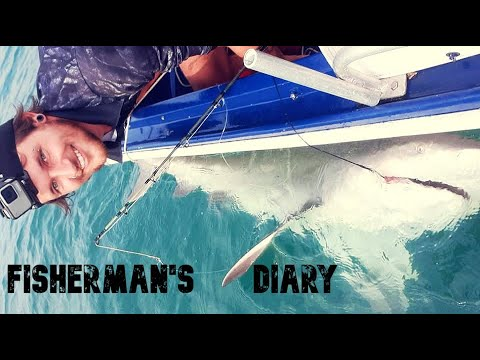 Moreton Bay Bull Shark Off The Boat ~ Fisherman's Diary Ep 377