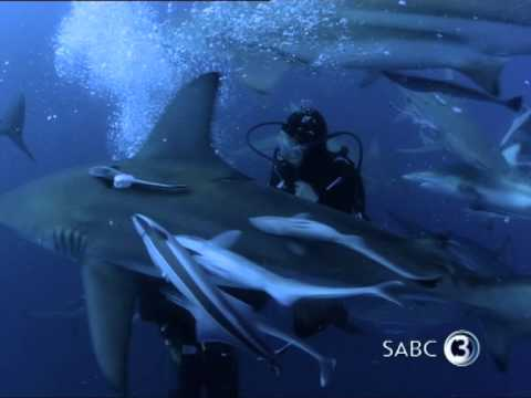 Top Billing goes diving with sharks