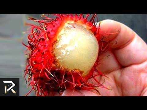 Exotic Foods You Must Never Consume (brutal Foods)