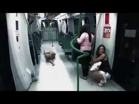 scherzo horror: 100 zombie nella metropolitana!